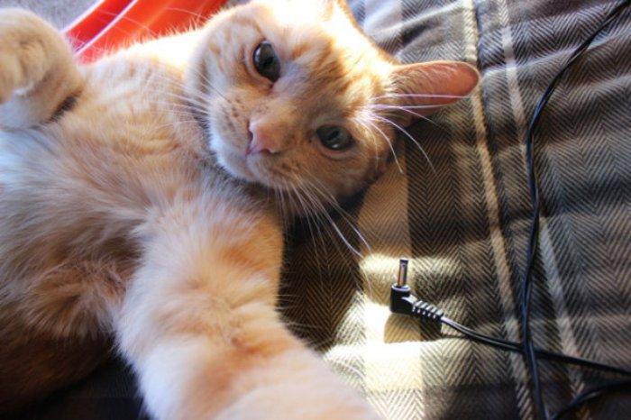 Selfie Çekmenin Ustası Kediler