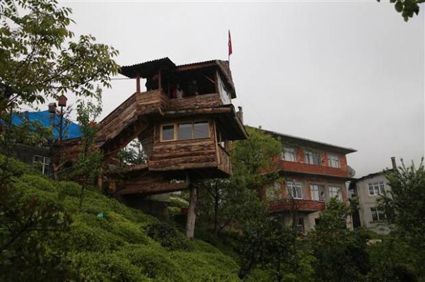 Kuzenine inat ceviz ağacına ev yaptı