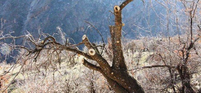VBB, bölgeyi fıstık ağaçlarıyla donatacak