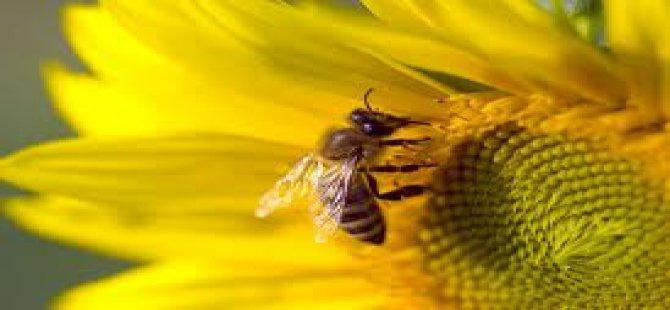 Arılar soğuktan ölünce güneş enerjili kovan geliştirdi