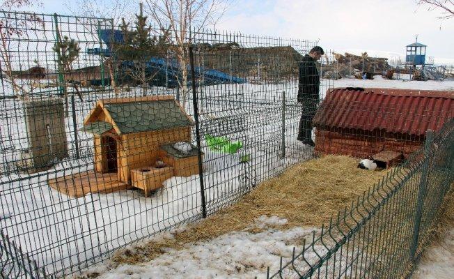 Yetkililer uyardı! 14 Şubat Sevgililer Gününde tavşan almayın