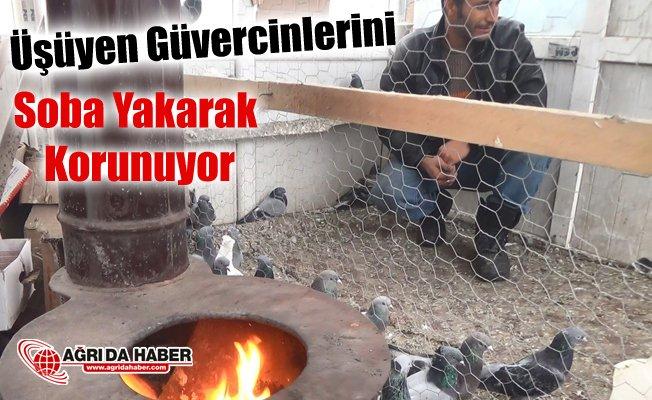 Ağrılı vatandaş soba yakarak güvercinlerini donmaktan koruyor
