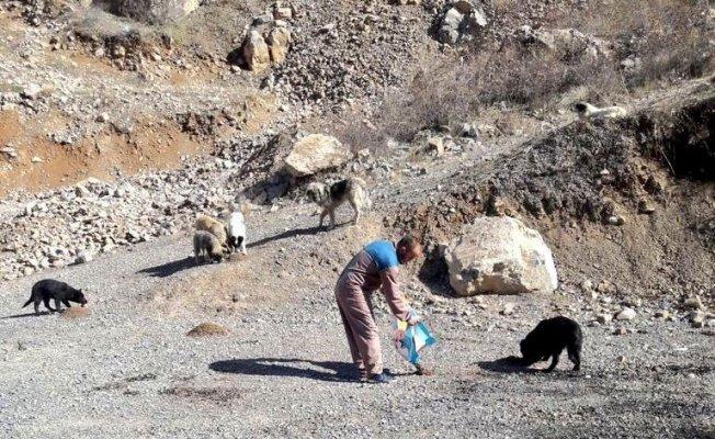 Hakkari'de sokak hayvanlarına yiyecek bırakıldı