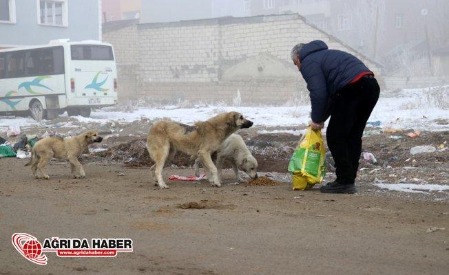 Kış ayında Sokak Hayvanlarını Unutmadılar