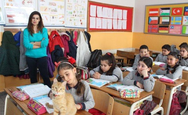 Veli şikayetiyle uzaklaştırılan kedi Tombi yeniden okula döndü