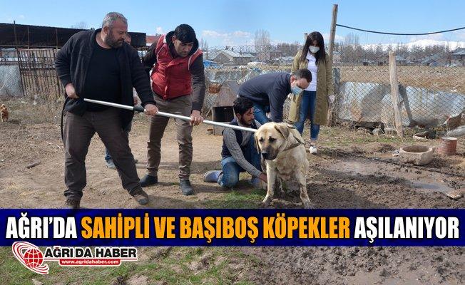 Ağrı'da Sahipli ve Başıboş Köpekler Aşılanıyor