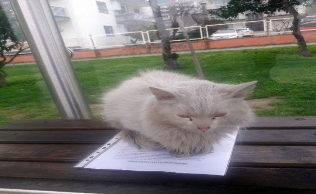İstenmeyen kedi için yazı astı, paylaşım rekoru kırdı