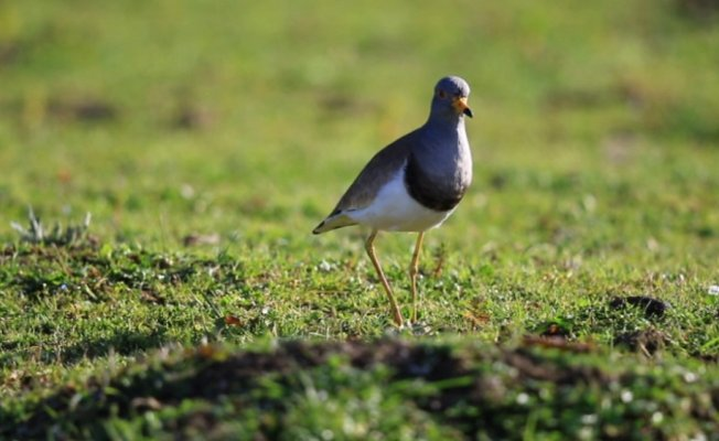Türkiye'de yeni bir kuş türü tespit edildi