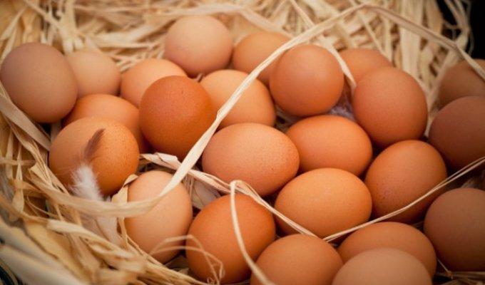 Köy Yumurtası Hilesi Bu Uygulama ile Sona Eriyor!