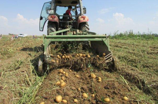 Son Zamanlarda Patates Fiyatı Tavan Yaptı