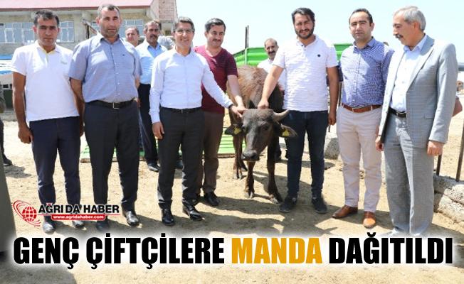 Ağrı'da Genç Çiftçi Projesi ile Genç Çiftçilere Manda Dağıtıldı