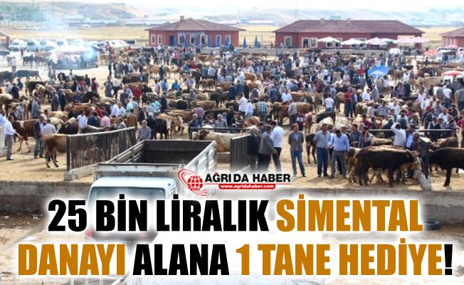 Ağrı'da 25 Bin Liralık Simental Dana Alana Biri Hediye!