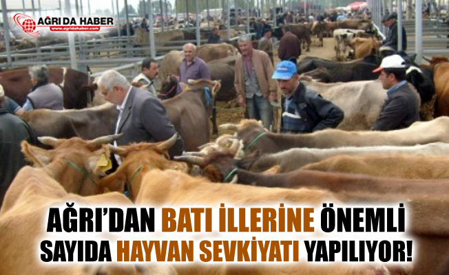 Ağrı'dan Batı İllerine Önemli Sayıda Hayvan Sevkiyatı
