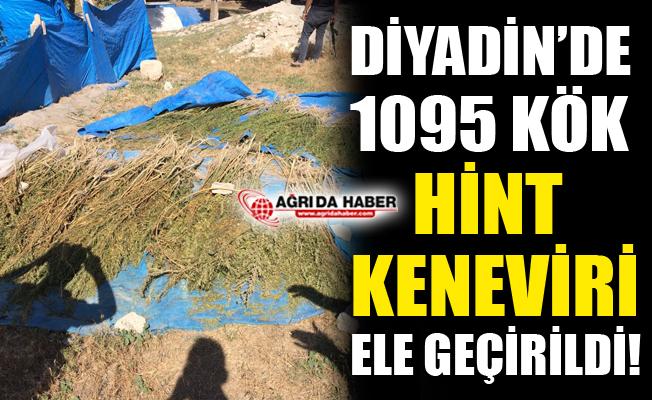 Ağrı Diyadin'de 1095 Kök Hint Keneviri Ele Geçirildi!