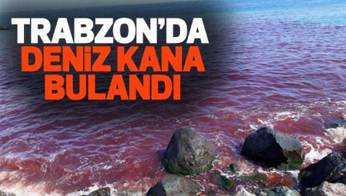 Trabzon'da korkutan Deniz görüntüsü! Deniz Kan Rengine Döndü