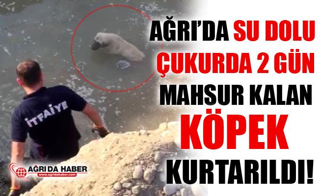 Ağrı'da Su Çukurunda 2 Gün Mahsur Kalan Köpek Kurtarıldı