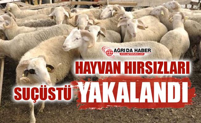 Ağrı'dan Giden Hayvan Hırsızları Erzurum'da Suçüstü Yakalandı!