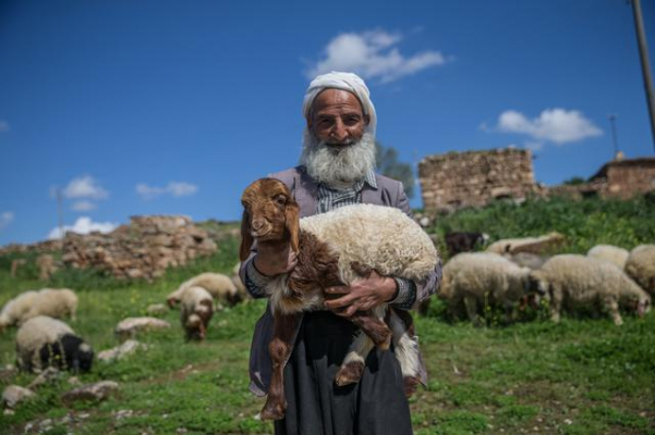 5 Bin TL'ye Çoban Bulunmuyor