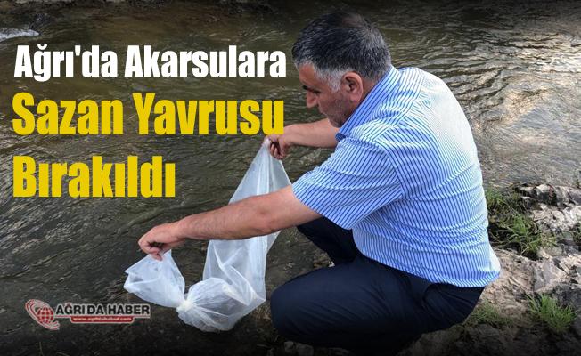 Ağrı İl Tarım ve Orman Müdürlüğü Akarsulara Sazan Yavrusu bıraktı