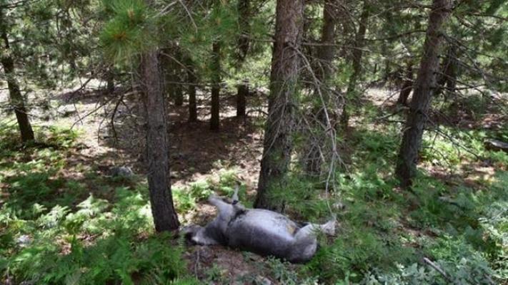 Ormandaki Eşekler Katledildi!