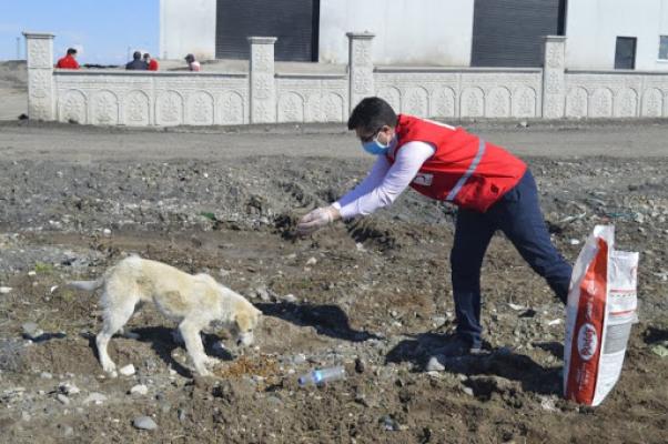 Genç Kızılay Gönüllüleri Hayvanları Unutmadı