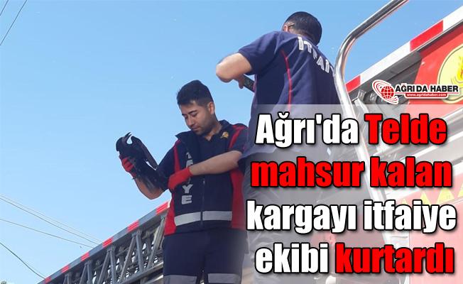 Ağrı'da Telde mahsur kalan kargayı itfaiye ekibi kurtardı