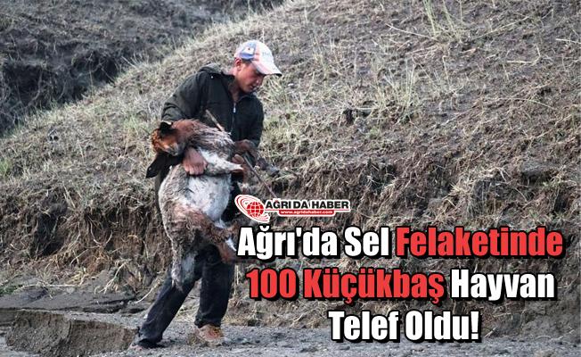 Ağrı'da Sel Felaketinde 100 Küçükbaş Hayvan Telef Oldu!