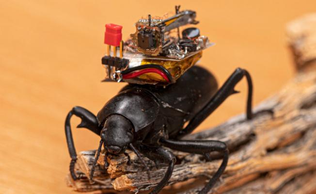 Böceklerin üzerine yerleştirebilecek kameralar geliştirildi