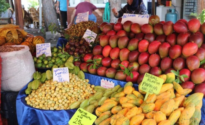 Antalya'da Yetişiyor! Fiyatı dudak uçuklattı