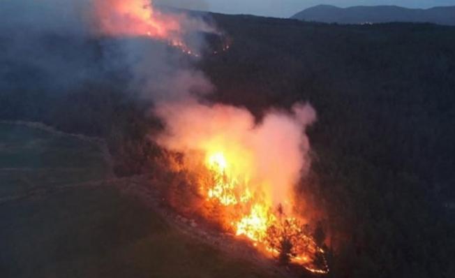Muğla'daki Yangında Sabotaj İddiası