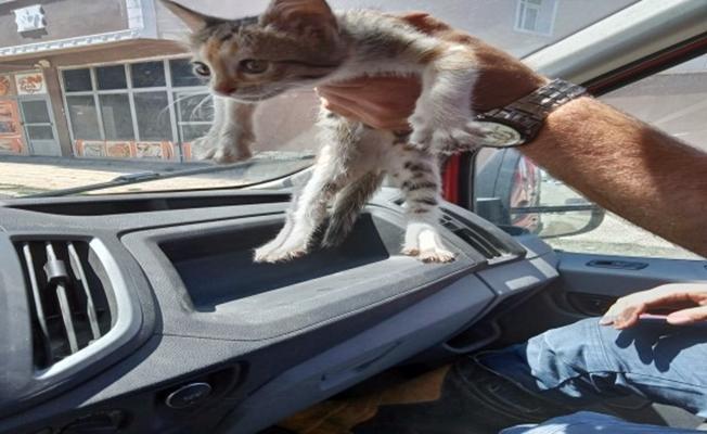 Ağrı'da Kedi Kurtarma Operasyonu!