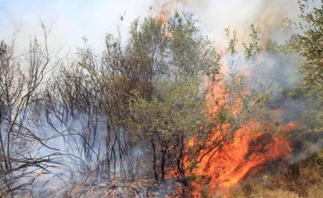 Osmaniye'de çıkan orman yangını soğutma çalışmaları sürüyor
