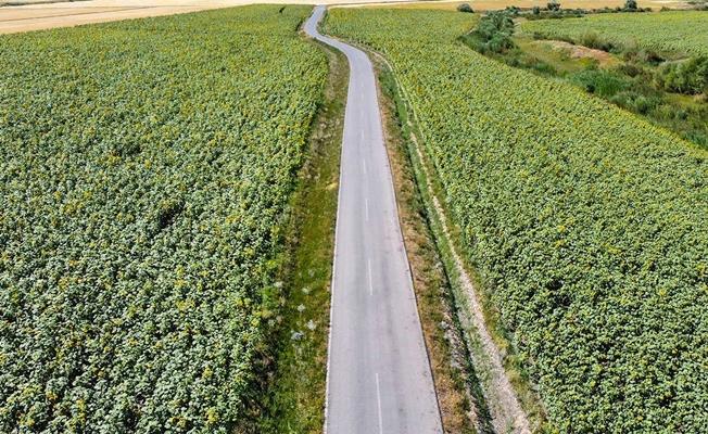 Ağrı'da tarımla birlikte istihdamda arttı