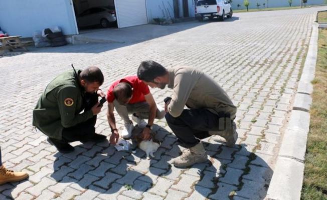 Diyadin'de yaralı tavşana müdahale edildi