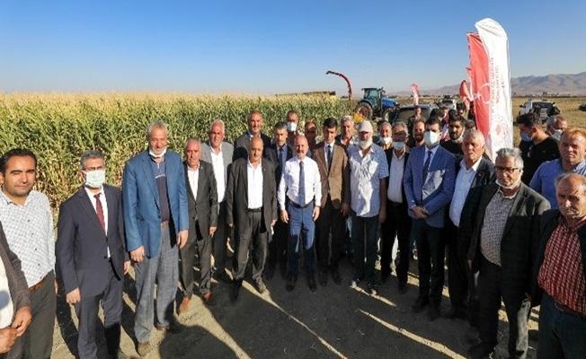 Eleşkirt'te silajlık mısır hasadına başlandı
