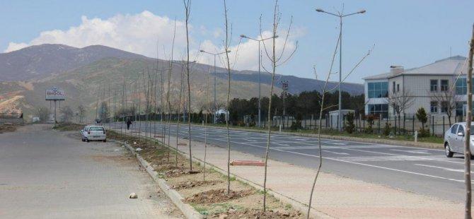 Bingöl Belediyesinden yeşillendirme çalışmaları
