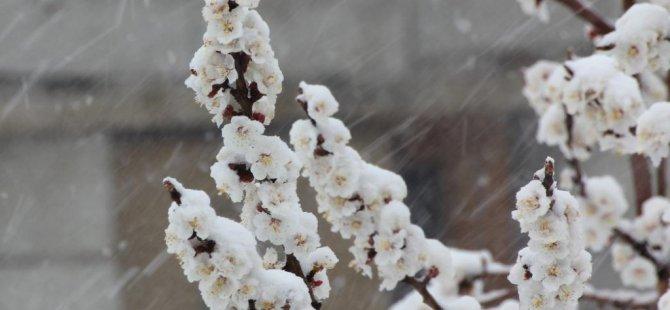 Erciş'te don uyarısı