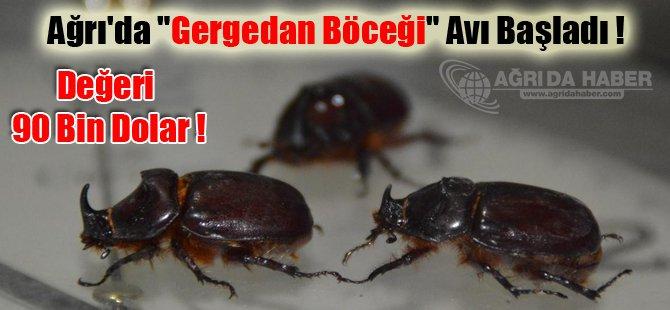 Ağrı'da 'Gergedan Böceği' Avı Başladı !