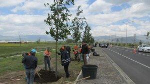 Erzurum Büyükşehir Belediyesi'nin yeşillendirme çalışmaları