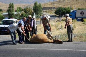 Erzincan'da tır sürüye çarptı: 2 inek telef oldu