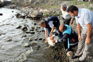 Kars göllerini balıklandırma çalışmaları