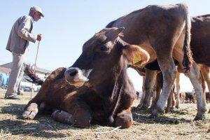 Besicilerin ithal et sıkıntısı