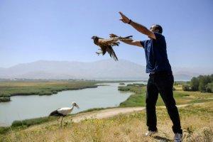 Tedavisi tamamlanan kuşlar doğaya salındı