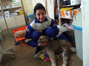 Bitlis'de Sokak Hayvanlarına Bakım Projesi