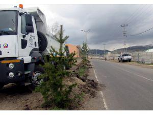Sarıkamış Belediyesinden Ağaçlandırma Çalışması