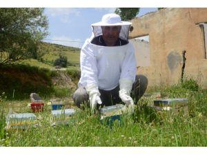 Hizan'da İlk Defa 'Ana Arı' Üretiliyor