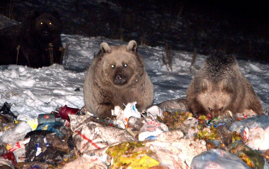 Kars'ta Aç Kalan Ayılar İlçeye İndi