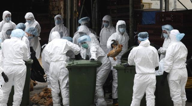 Fransa'da bu kış ilk kez kuş gribi virüsü H5N8 tespit edildiği bildirildi