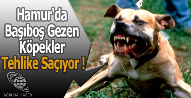 Hamur'da Başıboş Gezen Köpekler Tehlike Saçıyor !