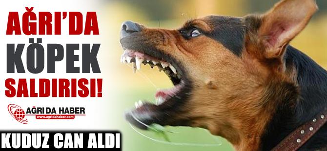 Ağrı'da Köpek Saldırısı Sonucu 1 Kişi Hayatını Kaybetti